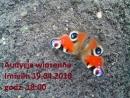 2018.04.19 Audycja Wiosenna Imielin