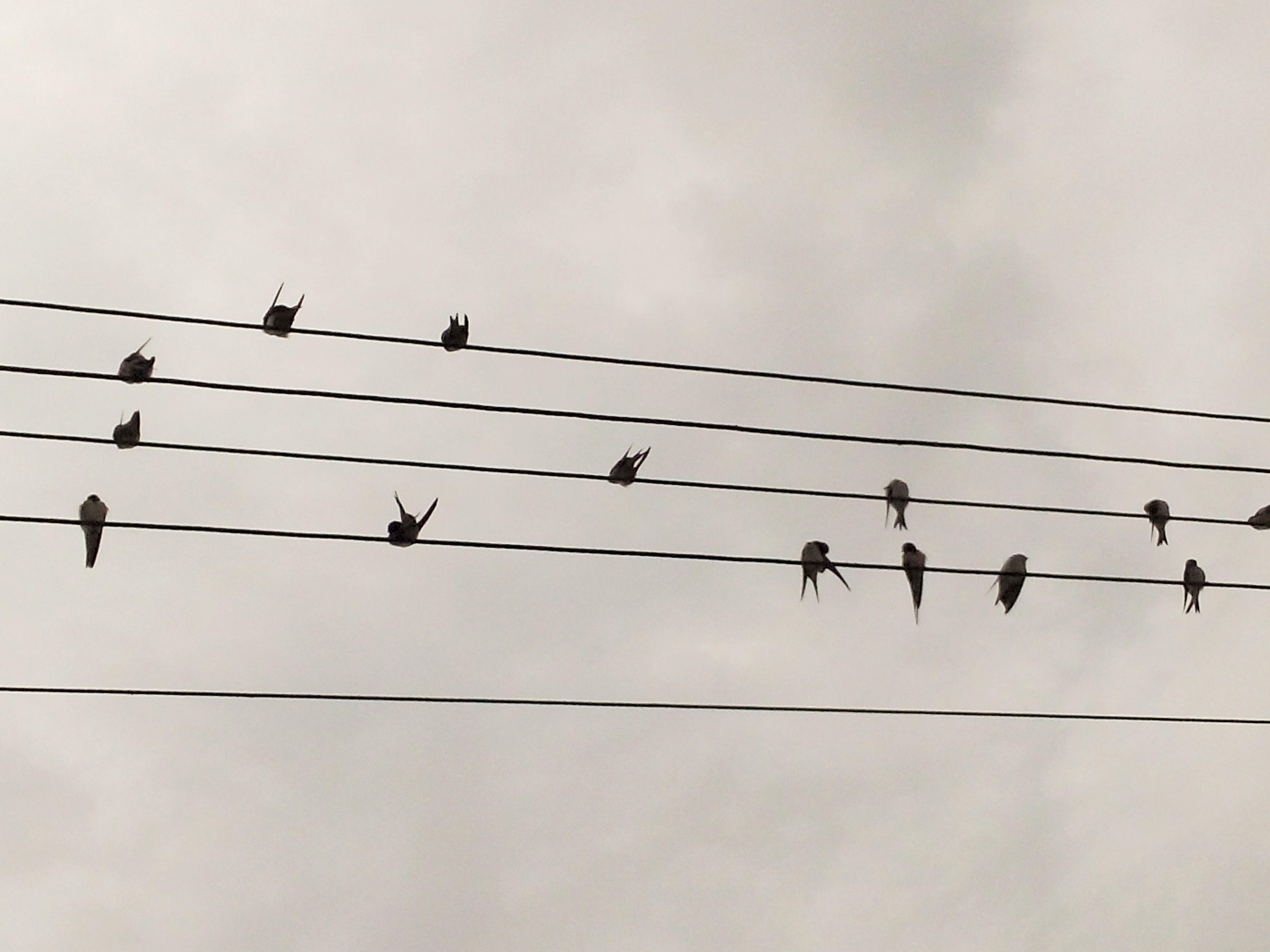 Regulamin opłat za naukę w Szkole muzyczne Studio Muzyczne ARTE